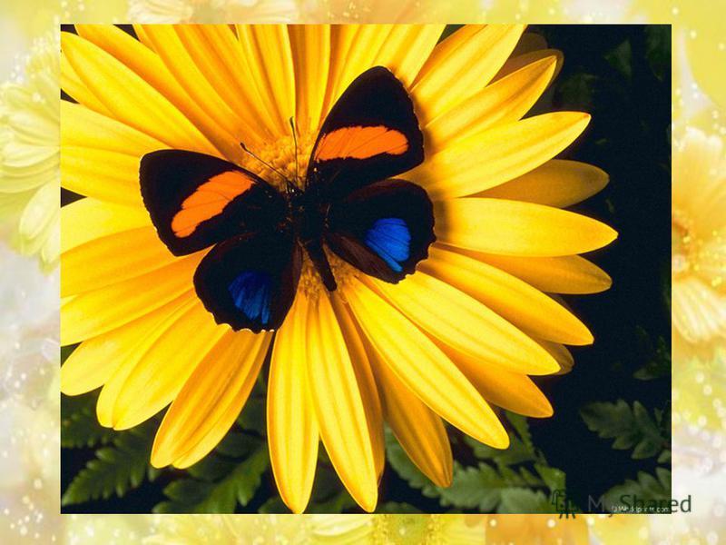 Спал цветок… И вдруг проснулся, Больше спать не захотел, Шевельнулся, встрепенулся, Взвился вверх и улетел.