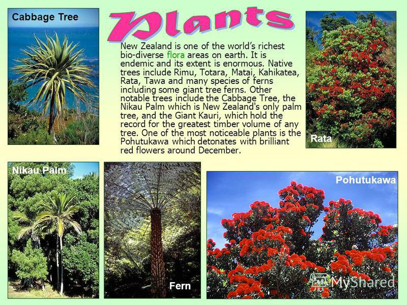 New Zealand is one of the worlds richest bio-diverse flora areas on earth. It is endemic and its extent is enormous. Native trees include Rimu, Totara, Matai, Kahikatea, Rata, Tawa and many species of ferns including some giant tree ferns. Other nota