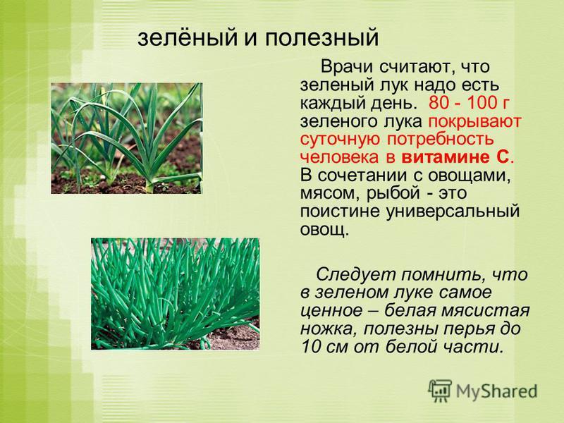 зелёный и полезный Врачи считают, что зеленый лук надо есть каждый день. 80 - 100 г зеленого лука покрывают суточную потребность человека в витамине С. В сочетании с овощами, мясом, рыбой - это поистине универсальный овощ. Следует помнить, что в зеле