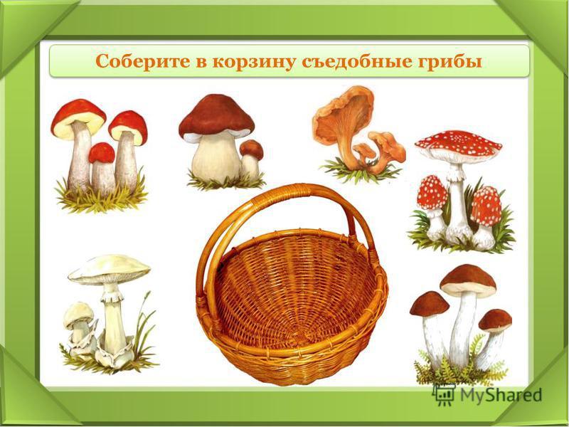 Соберите в корзину съедобные грибы