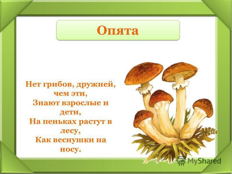 Нет грибов, дружней, чем эти, Знают взрослые и дети, На пеньках растут в лесу, Как веснушки на носу. Опята