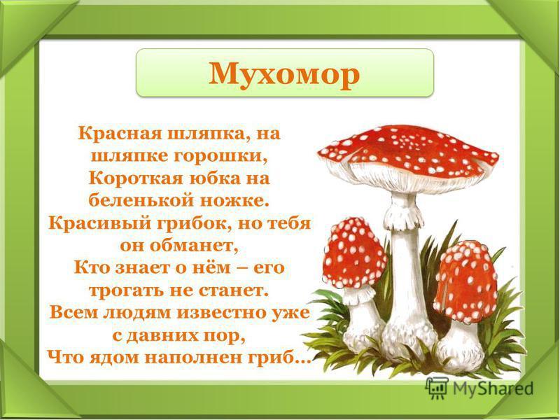 Красная шляпка, на шляпке горошки, Короткая юбка на беленькой ножке. Красивый грибок, но тебя он обманет, Кто знает о нём – его трогать не станет. Всем людям известно уже с давних пор, Что ядом наполнен гриб… Мухомор