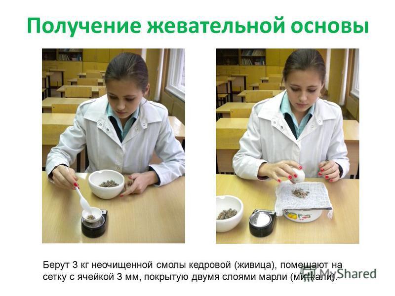 Получение жевательной основы Берут 3 кг неочищенной смолы кедровой (живица), помещают на сетку с ячейкой 3 мм, покрытую двумя слоями марли (миткали).