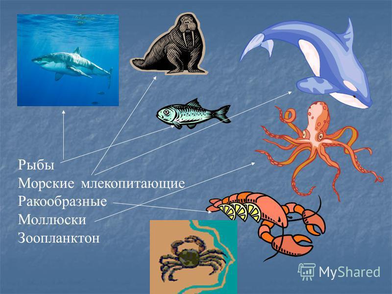 Рыбы Морские млекопитающие Ракообразные Моллюски Зоопланктон