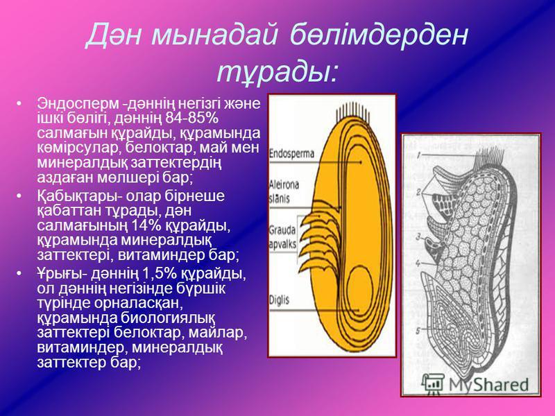 Дән мынадай бөлімдерден тұрады: Эндосперм -дәннің негізгі және ішкі бөлігі, дәннің 84-85% салмағын құрайды, құрамында көмірсулар, белоктар, май мен минералдық заттектердің аздаған мөлшері бар; Қабықтары- олар бірнеше қабаттан тұрады, дән салмағының 1