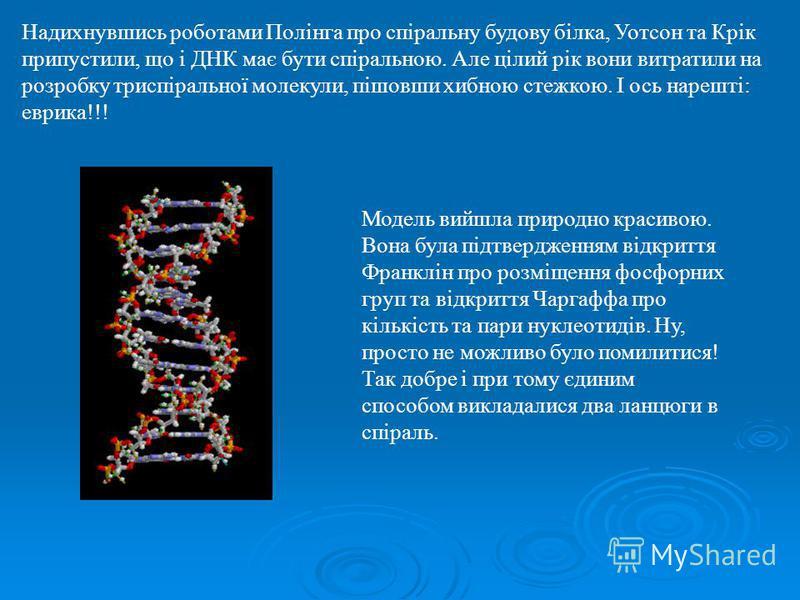Надихнувшись роботами Полінга про спіральну будову білка, Уотсон та Крік припустили, що і ДНК має бути спіральною. Але цілий рік вони витратили на розробку триспіральної молекули, пішовши хибною стежкою. І ось нарешті: еврика!!! Модель вийшла природн