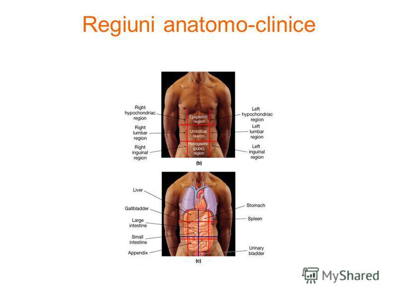 Regiuni anatomo-clinice