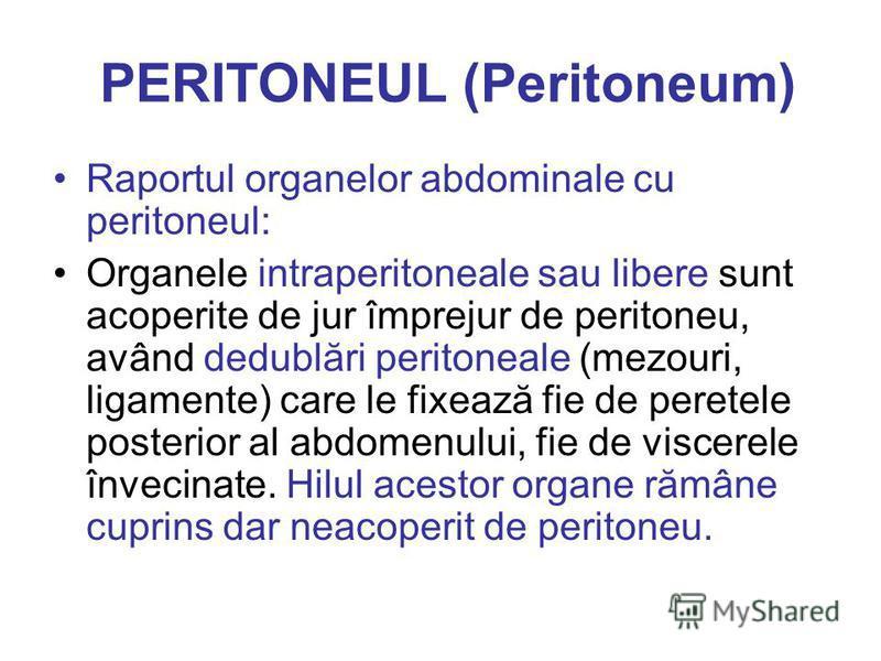 PERITONEUL (Peritoneum) Raportul organelor abdominale cu peritoneul: Organele intraperitoneale sau libere sunt acoperite de jur împrejur de peritoneu, având dedublări peritoneale (mezouri, ligamente) care le fixează fie de peretele posterior al abdom