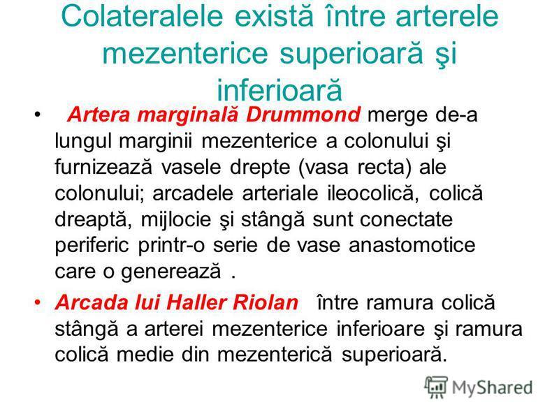 Colateralele există între arterele mezenterice superioară şi inferioară Artera marginală Drummond merge de-a lungul marginii mezenterice a colonului şi furnizează vasele drepte (vasa recta) ale colonului; arcadele arteriale ileocolică, colică dreaptă