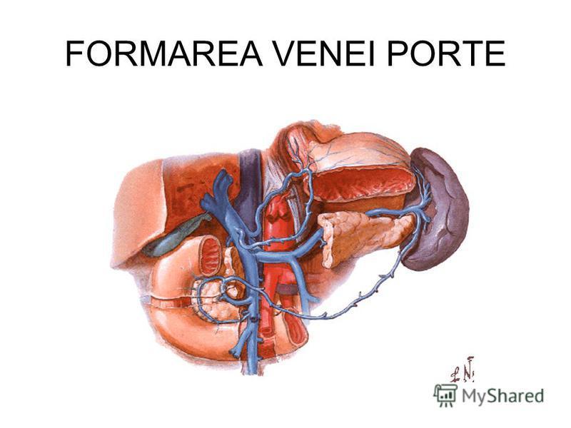 FORMAREA VENEI PORTE