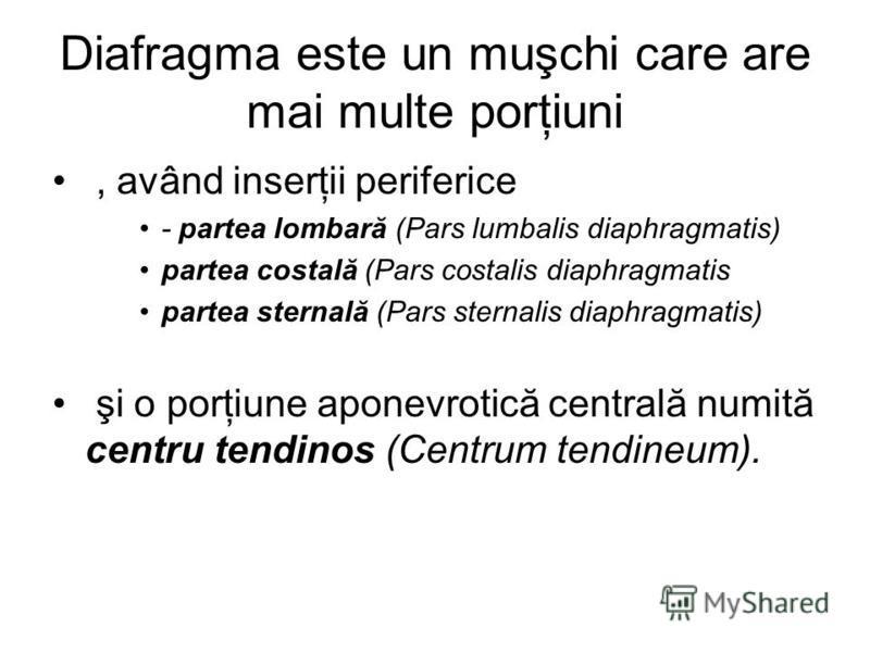 Diafragma este un muşchi care are mai multe porţiuni, având inserţii periferice - partea lombară (Pars lumbalis diaphragmatis) partea costală (Pars costalis diaphragmatis partea sternală (Pars sternalis diaphragmatis) şi o porţiune aponevrotică centr
