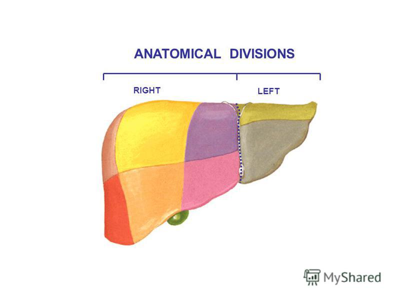 RIGHT LEFT ANATOMICAL DIVISIONS