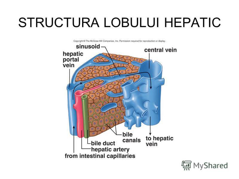 STRUCTURA LOBULUI HEPATIC