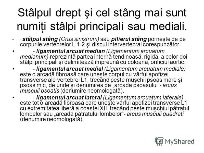 Stâlpul drept şi cel stâng mai sunt numiţi stâlpi principali sau mediali. - stâlpul stâng (Crus sinistrum) sau pilierul stâng porneşte de pe corpurile vertebrelor L 1-2 şi discul intervertebral corespunzător. - ligamentul arcuat median (Ligamentum ar