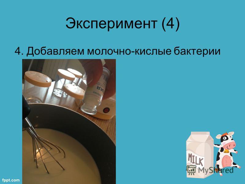Эксперимент (4) 4. Добавляем молочно-кислые бактерии