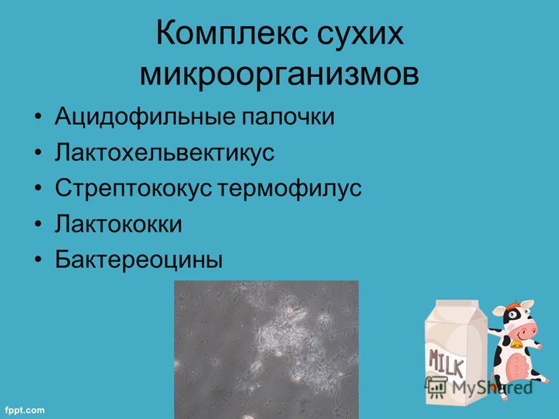 Комплекс сухих микроорганизмов Ацидофильные палочки Лактохельвектикус Стрептококус термофилус Лактококки Бактереоцины