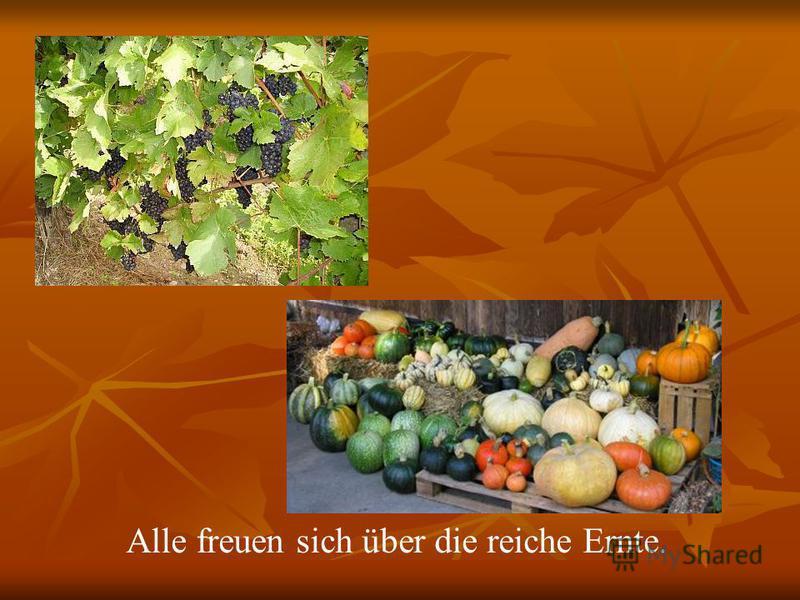 Alle freuen sich über die reiche Ernte.