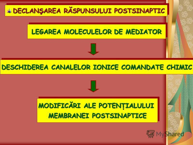 DECLANŞAREA RĂSPUNSULUI POSTSINAPTIC DECLANŞAREA RĂSPUNSULUI POSTSINAPTIC LEGAREA MOLECULELOR DE MEDIATOR DESCHIDEREA CANALELOR IONICE COMANDATE CHIMIC MODIFICĂRI ALE POTENŢIALULUI MEMBRANEI POSTSINAPTICE MODIFICĂRI ALE POTENŢIALULUI MEMBRANEI POSTSI