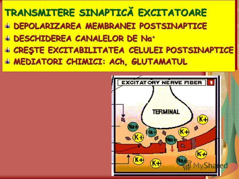TRANSMITERE SINAPTICĂ EXCITATOARE DEPOLARIZAREA MEMBRANEI POSTSINAPTICE DEPOLARIZAREA MEMBRANEI POSTSINAPTICE DESCHIDEREA CANALELOR DE Na + DESCHIDEREA CANALELOR DE Na + CREŞTE EXCITABILITATEA CELULEI POSTSINAPTICE CREŞTE EXCITABILITATEA CELULEI POST