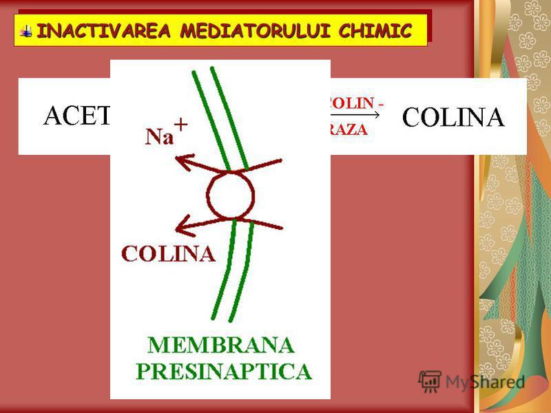 INACTIVAREA MEDIATORULUI CHIMIC INACTIVAREA MEDIATORULUI CHIMIC INACTIVAREA MEDIATORULUI CHIMIC