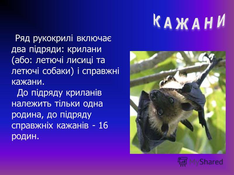 Ряд рукокрилі включає два підряди: крилани (або: летючі лисиці та летючі собаки) і справжні кажани. До підряду криланів належить тільки одна родина, до підряду справжніх кажанів - 16 родин.