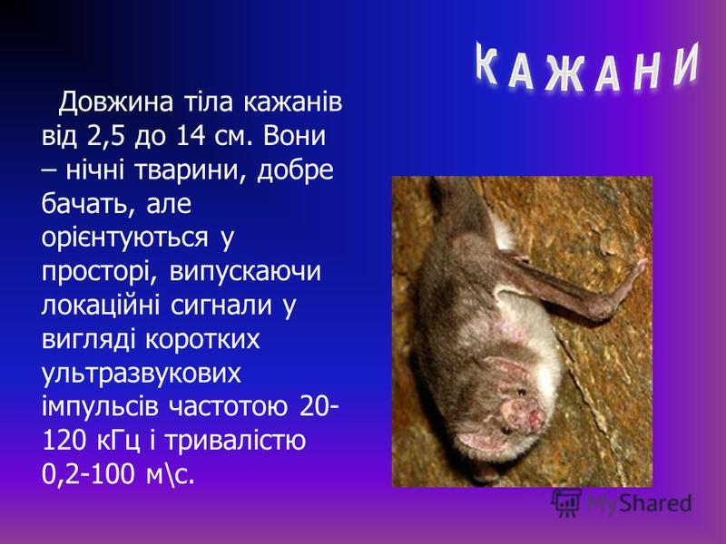 Довжина тіла кажанів від 2,5 до 14 см. Вони – нічні тварини, добре бачать, але орієнтуються у просторі, випускаючи локаційні сигнали у вигляді коротких ультразвукових імпульсів частотою 20- 120 кГц і тривалістю 0,2-100 м\с.