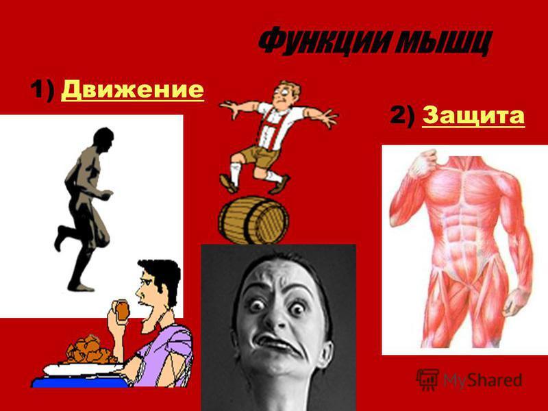 Функции мышц 1)Движение 2)Защита