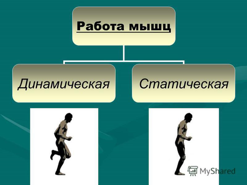 Работа мышц Динамическая Статическая