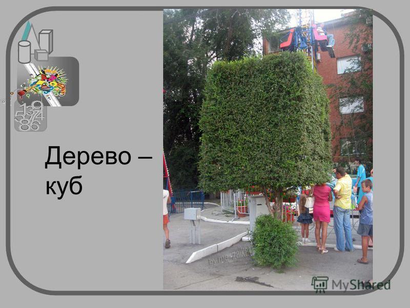 Дерево – куб