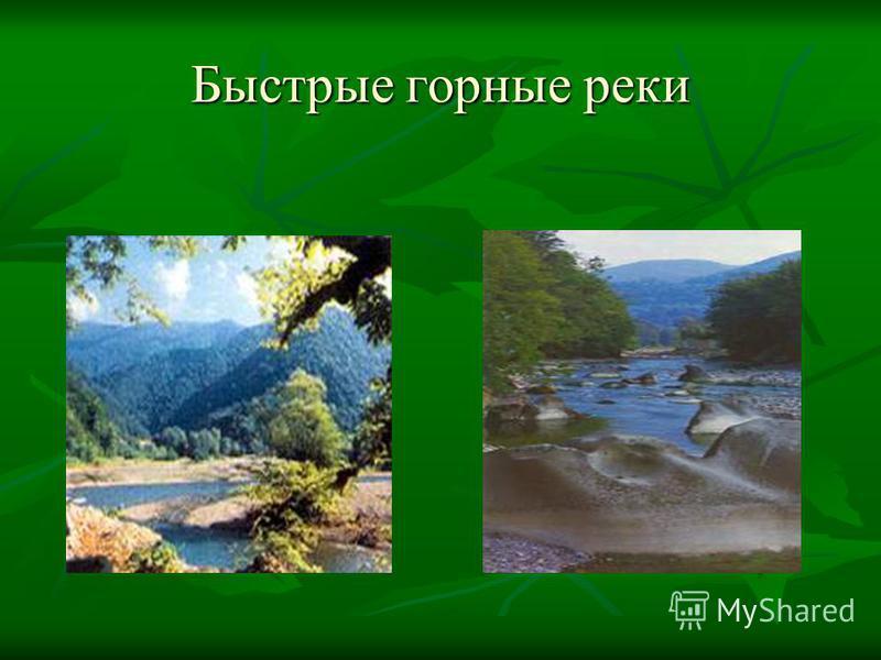 Быстрые горные реки