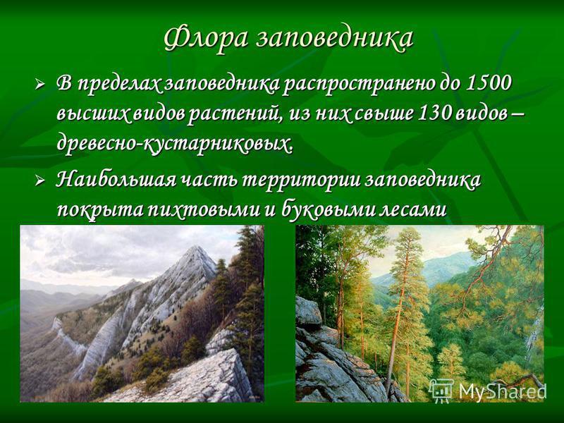 Флора заповедника В пределах заповедника распространено до 1500 высших видов растений, из них свыше 130 видов – древесно-кустарниковых. В пределах заповедника распространено до 1500 высших видов растений, из них свыше 130 видов – древесно-кустарников