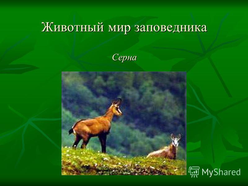 Животный мир заповедника Серна