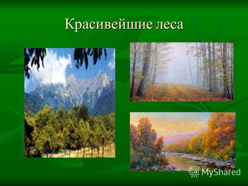 Красивейшие леса