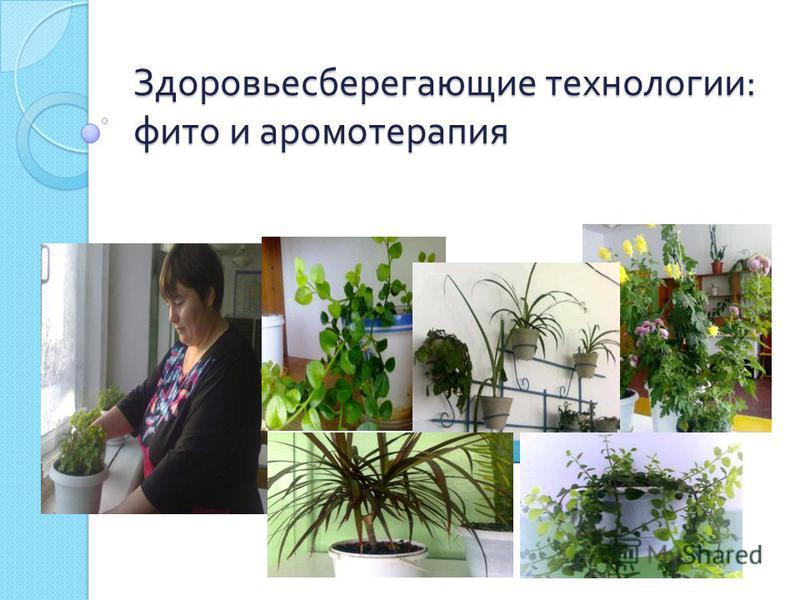 Здоровьесберегающие технологии : фито и ароматерапия