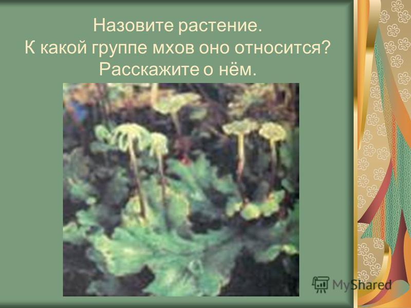 Назовите растение. К какой группе мхов оно относится? Расскажите о нём.