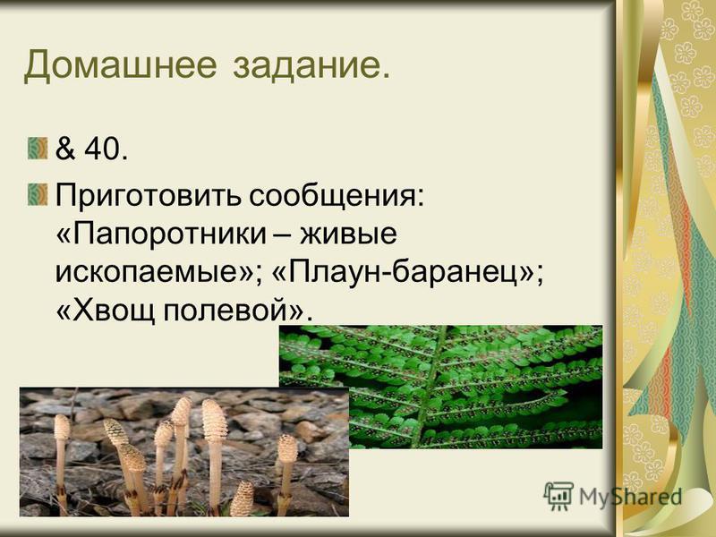 Домашнее задание. & 40. Приготовить сообщения: «Папоротники – живые ископаемые»; «Плаун-баранец»; «Хвощ полевой».