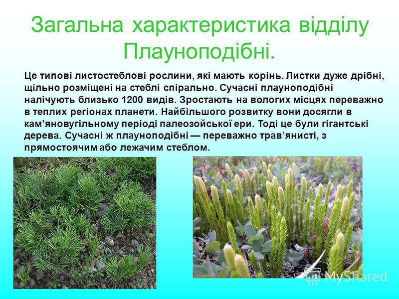 Загальна характеристика відділу Плауноподібні. Це типові листостеблові рослини, які мають корінь. Листки дуже дрібні, щільно розміщені на стеблі спірально. Сучасні плауноподібні налічують близько 1200 видів. Зростають на вологих місцях переважно в те
