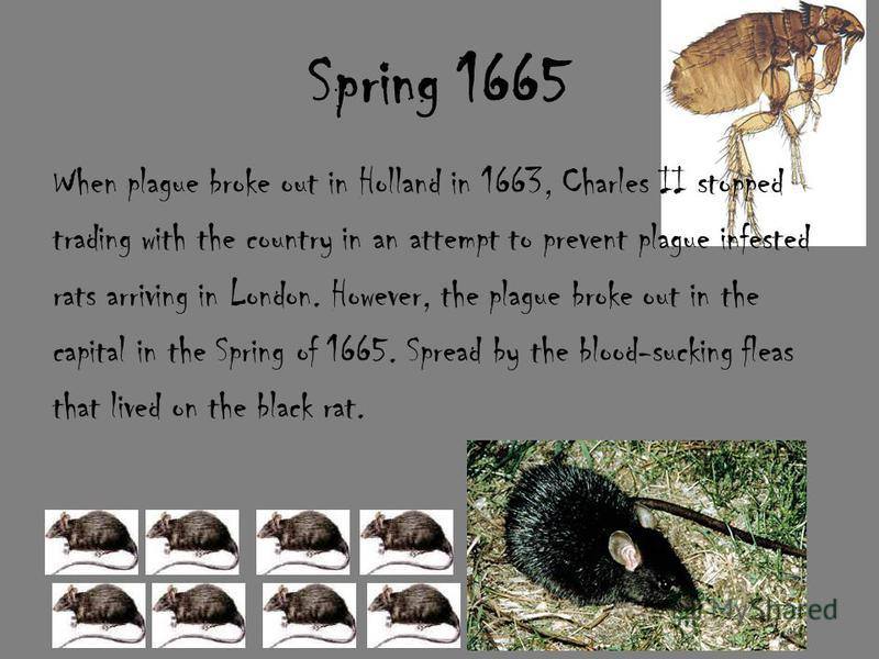 Spring 1665 When plague broke out in Holland in 1663, Charles II stopped trading with the country in an attempt to prevent plague infested rats arriving in London. However, the plague broke out in the capital in the Spring of 1665. Spread by the bloo