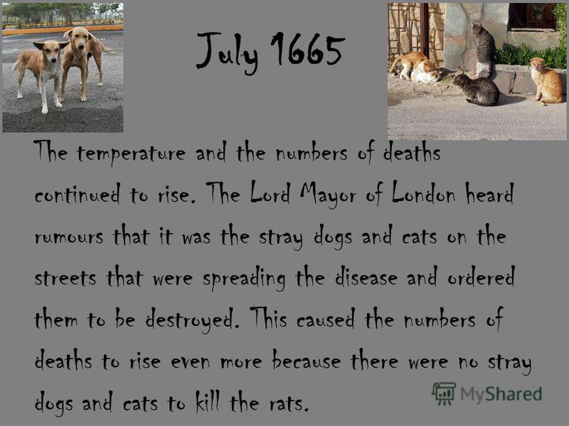 July 1665 The temperature and the numbers of deaths continued to rise. The Lord Mayor of London heard rumours that it was the stray dogs and cats on the streets that were spreading the disease and ordered them to be destroyed. This caused the numbers