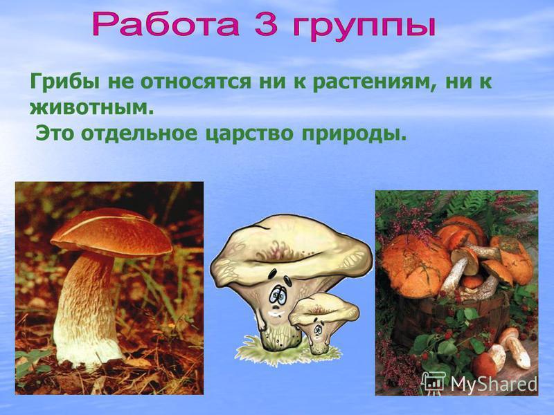 Грибы не относятся ни к растениям, ни к животным. Это отдельное царство природы.