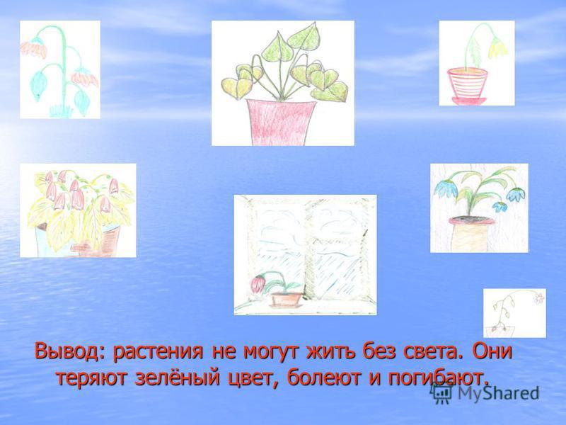 Вывод: растения не могут жить без света. Они теряют зелёный цвет, болеют и погибают.