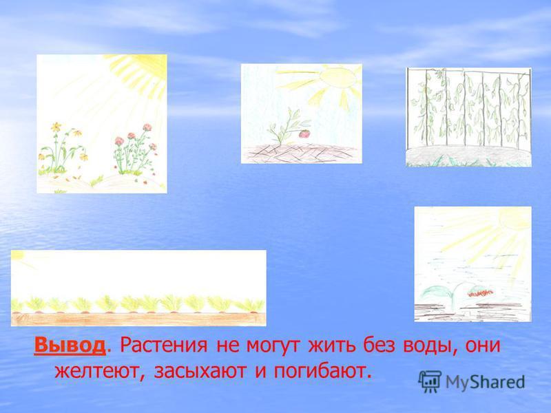 Вывод. Растения не могут жить без воды, они желтеют, засыхают и погибают.