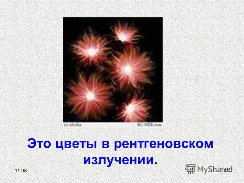 Это цветы в рентгеновском излучении. 11:1130