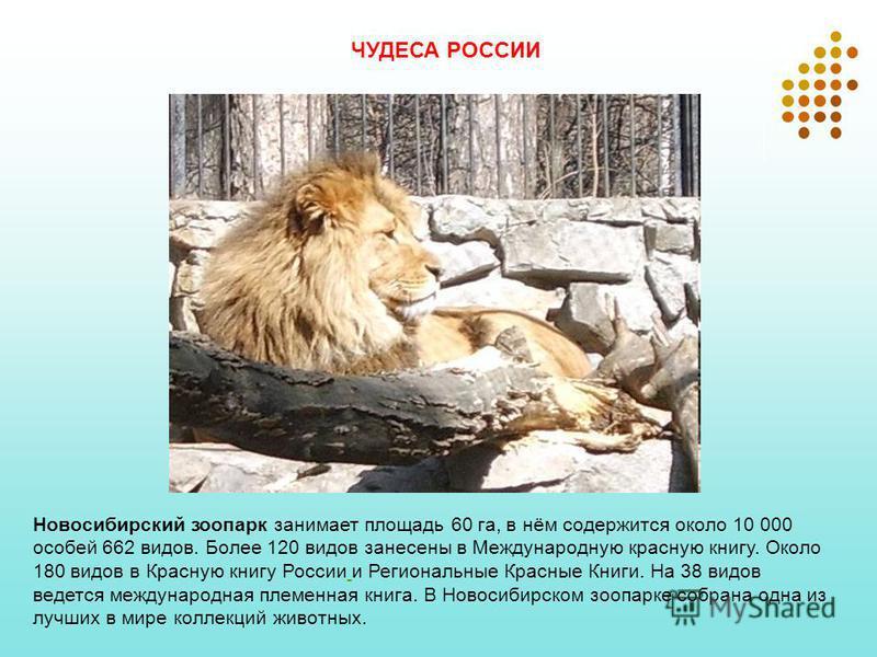 Новосибирский зоопарк занимает площадь 60 га, в нём содержится около 10 000 особей 662 видов. Более 120 видов занесены в Международную красную книгу. Около 180 видов в Красную книгу России и Региональные Красные Книги. На 38 видов ведется международн