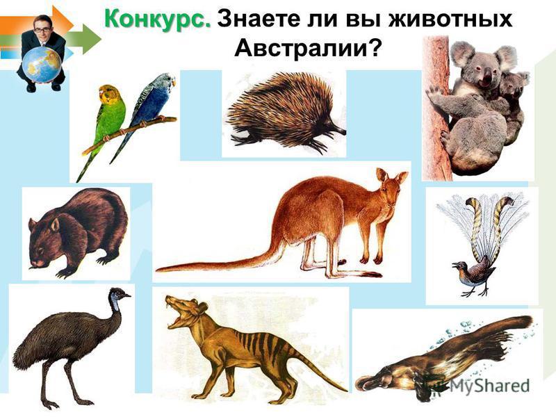Конкурс. Конкурс. Знаете ли вы животных Австралии?