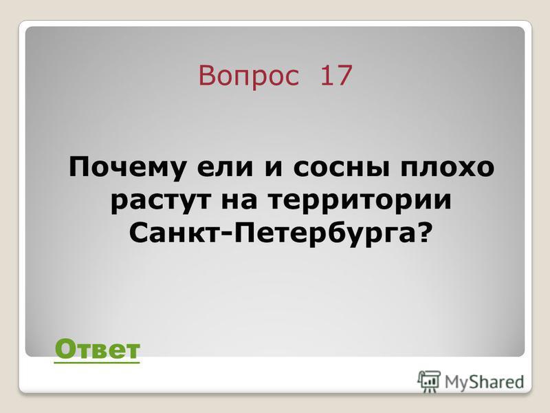 Вопрос 17 Ответ Почему ели и сосны плохо растут на территории Санкт-Петербурга?