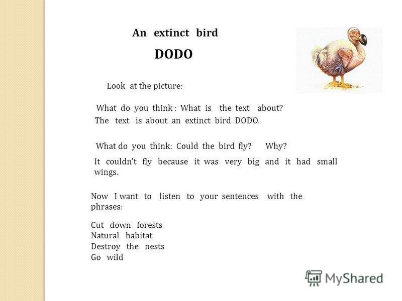 An extinct bird DODO What do you think : What is the text about? The text is about an extinct bird DODO. What do you think: Could the bird fly? Why? It couldnt fly because it was very big and it had small wings. Now I want to listen to your sentences
