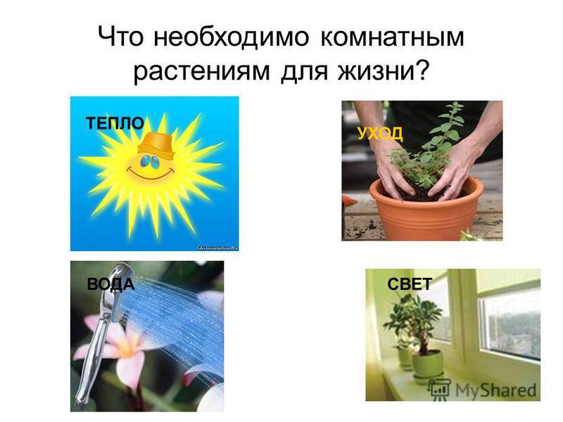 Что необходимо комнатным растениям для жизни? ТЕПЛО ВОДАСВЕТ УХОД