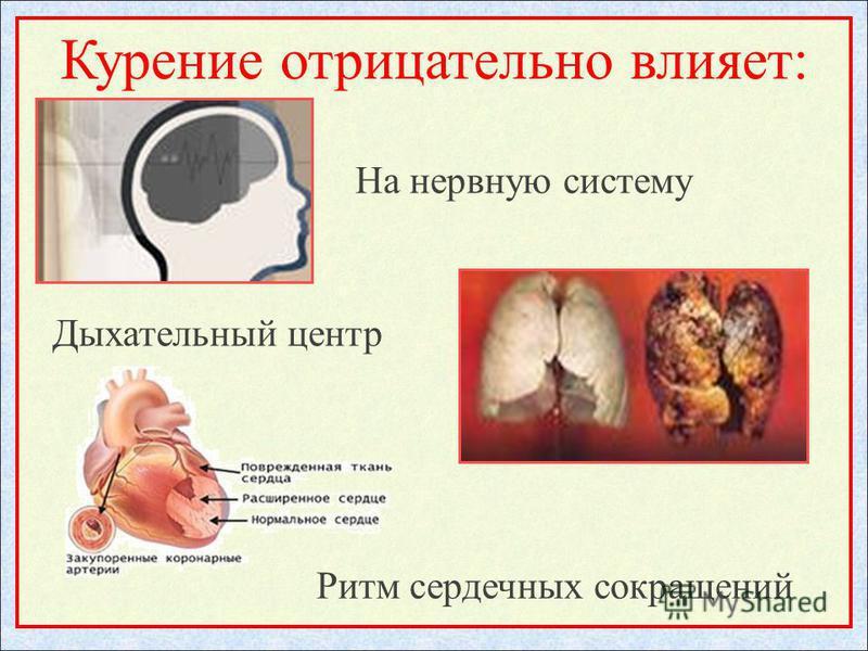 Курение отрицательно влияет: На нервную систему Дыхательный центр Ритм сердечных сокращений
