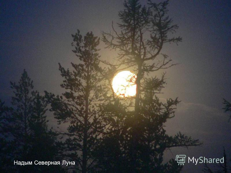 Надым Северная Луна